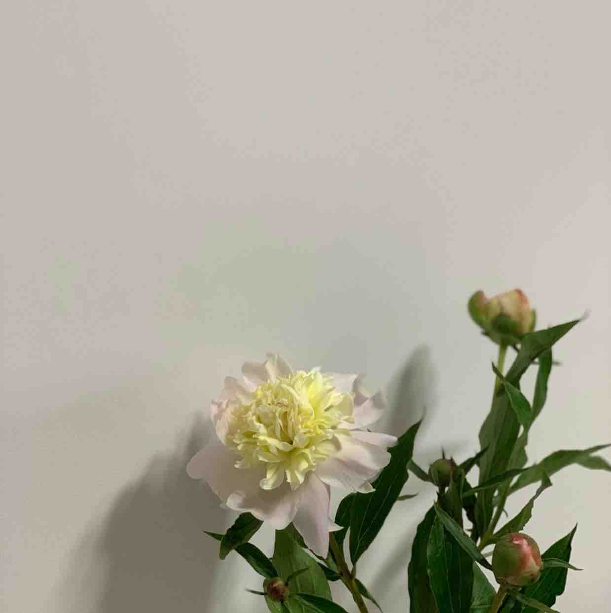 Qiao24692