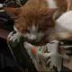 李只猫真系只猫