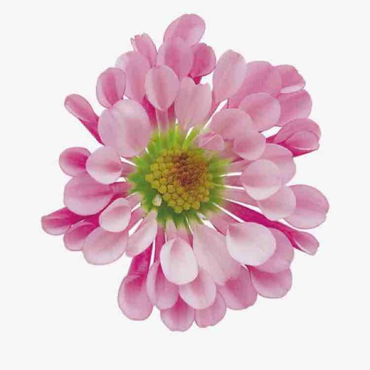 粉色小花花