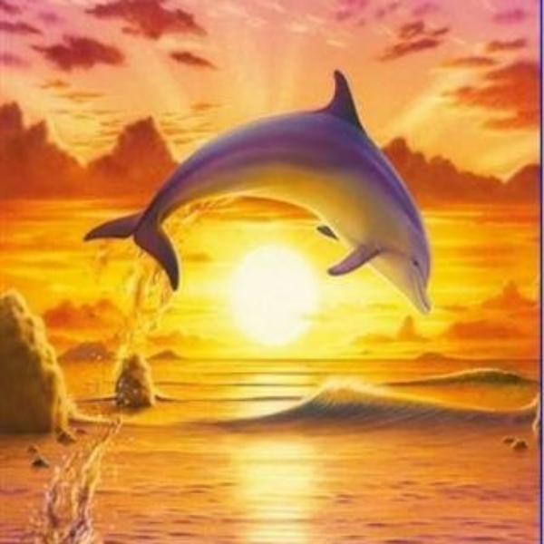 想飞的海豚个a