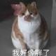 wo郑宏彬