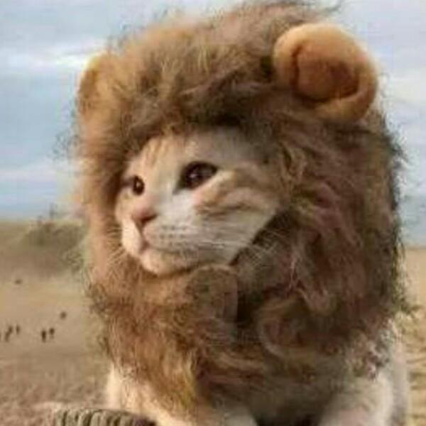 爱狮子的猫咪