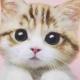 Tiffany大眼猫