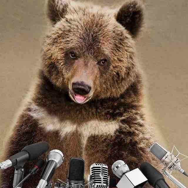 大熊苏尔来了
