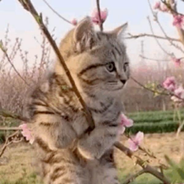 糯小米的猫
