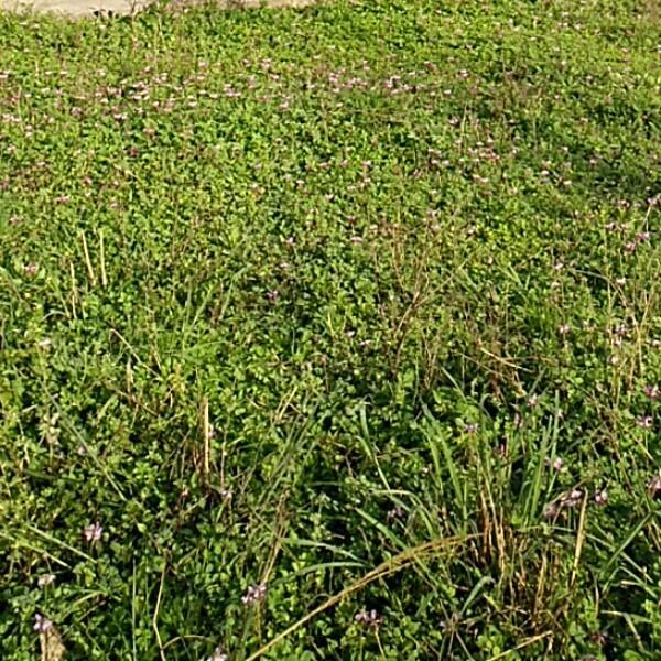 木棉花的春天53635