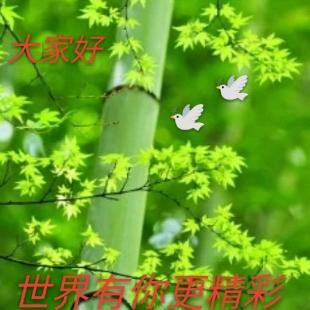 青竹墨韵32404