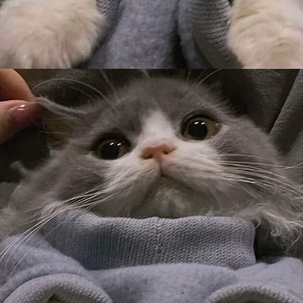 别哭了我会心疼的