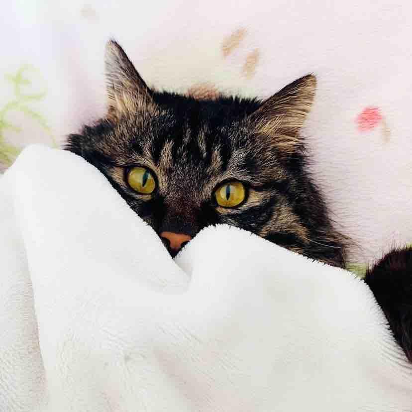 城堡里的小猫眯