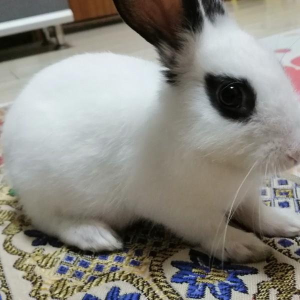 口whole口合小兔