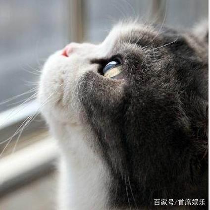 郎之XIU