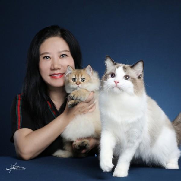 王艳布偶金渐层猫舍