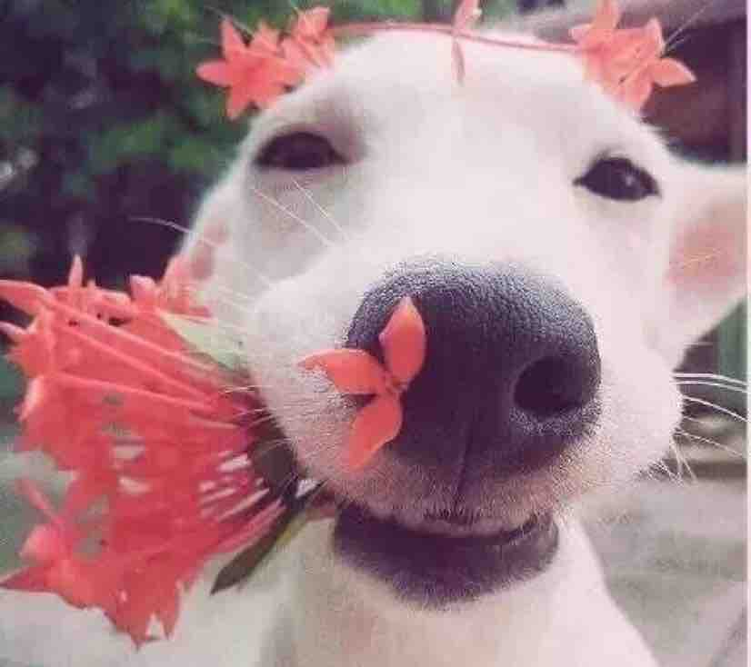 小丸子爱吃西红柿
