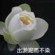 浪涛-3036