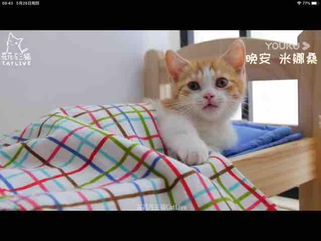 小猫可爱萌