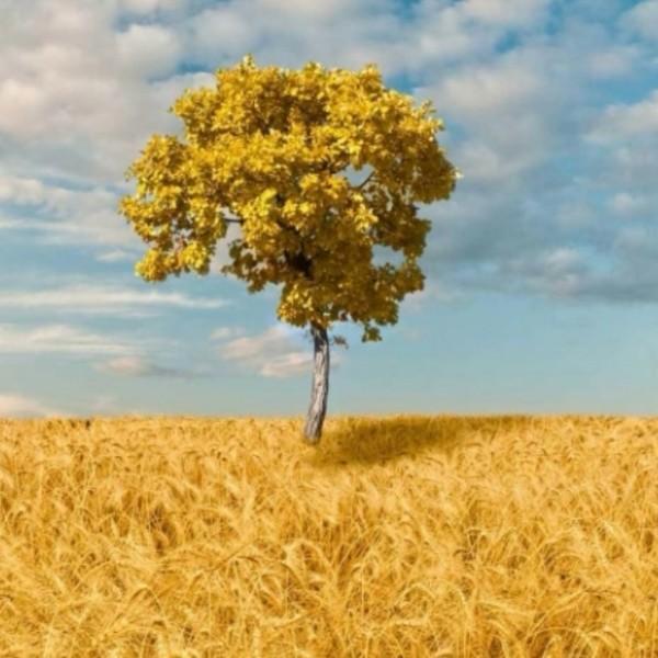 旷野中的一棵树