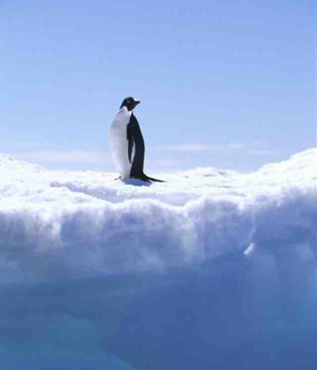 北极的penguin