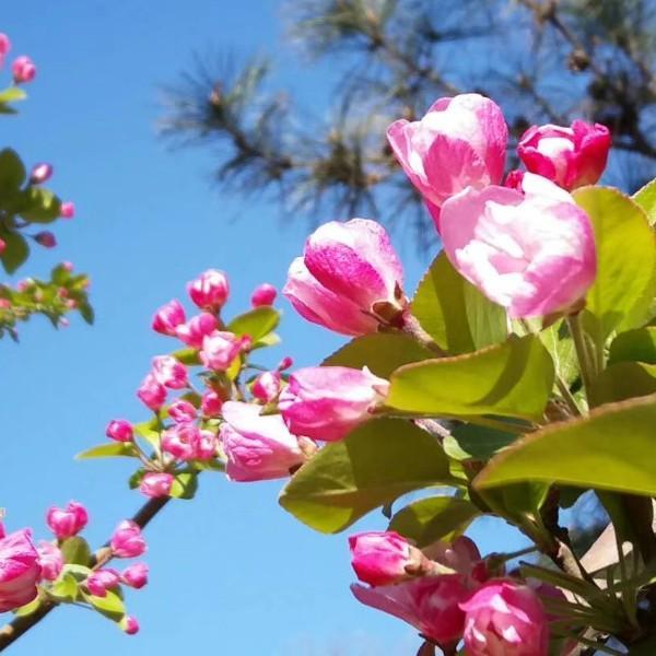 美丽春暖花开