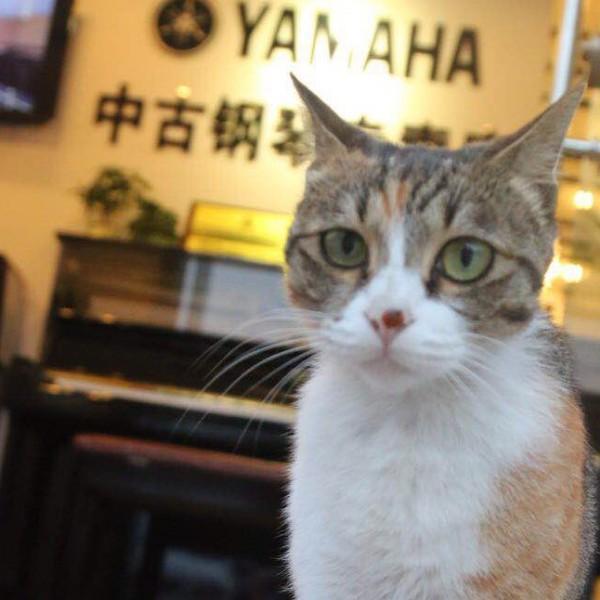 喜乐钢琴租赁福田店