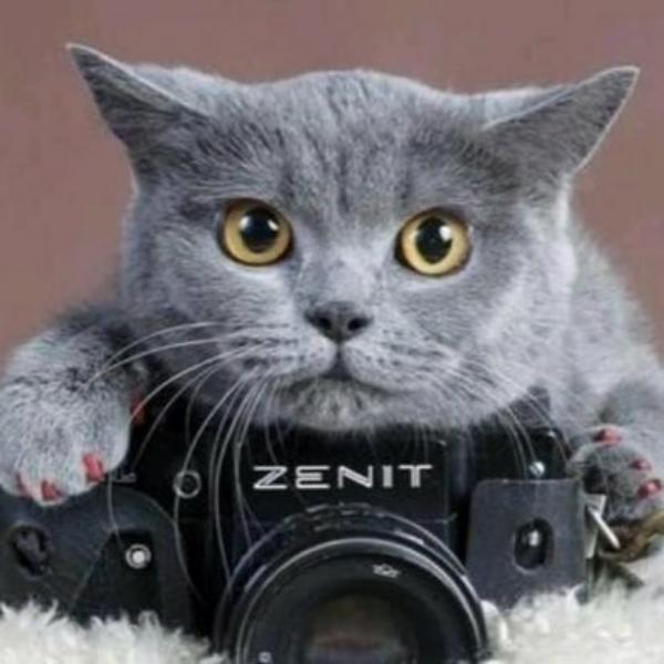 A老鼠不怕猫A