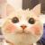 埼玉安猫儿