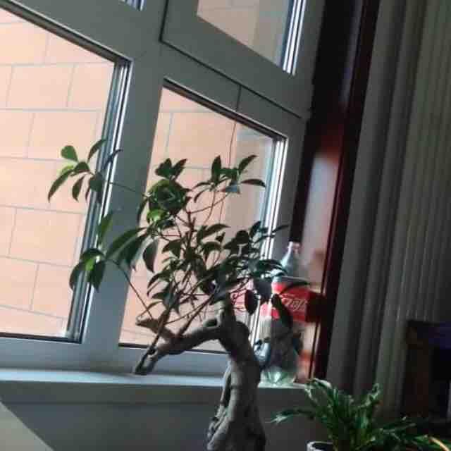 幸福的燕子xia