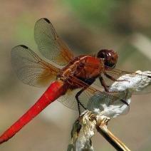 红蜻蜓de光阴的记忆