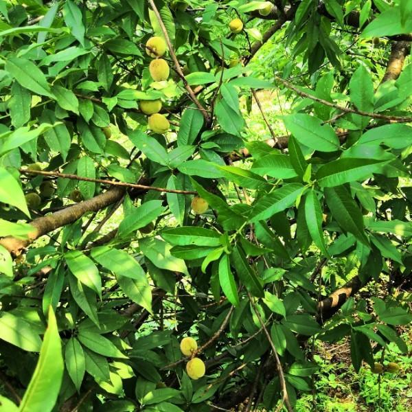 檬檬麻麻1980