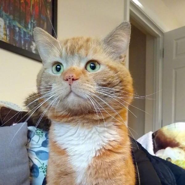 说瞎话的睁眼猫