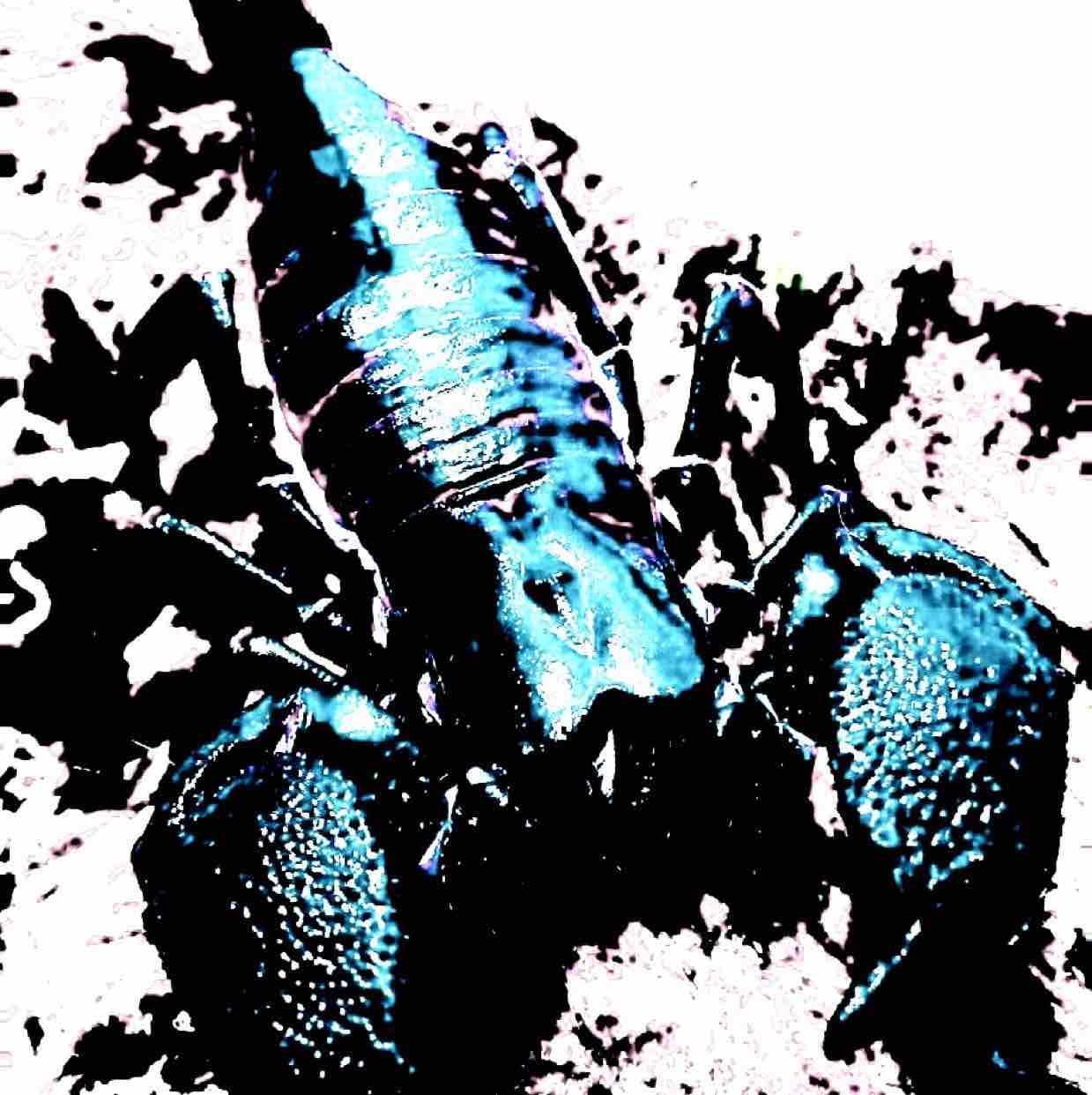 Scorpionartist