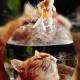 猫薄荷糖糖