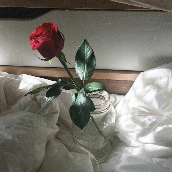 唯爱玫瑰香-