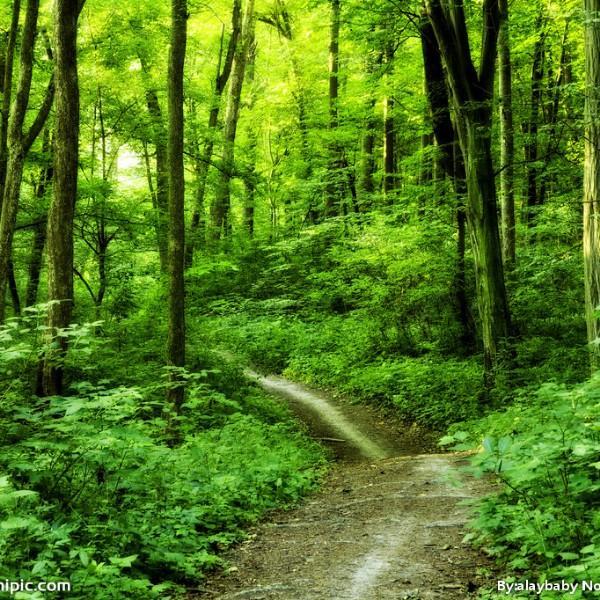 自然与风景