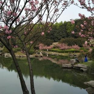 春春ZCC