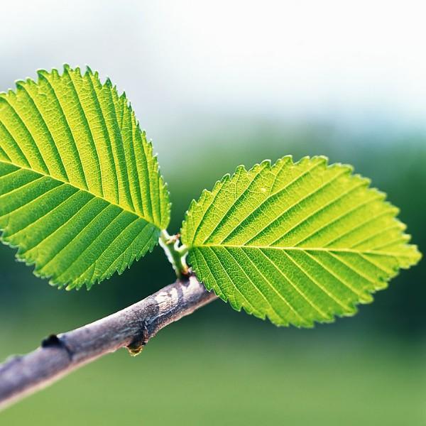 leaf_night