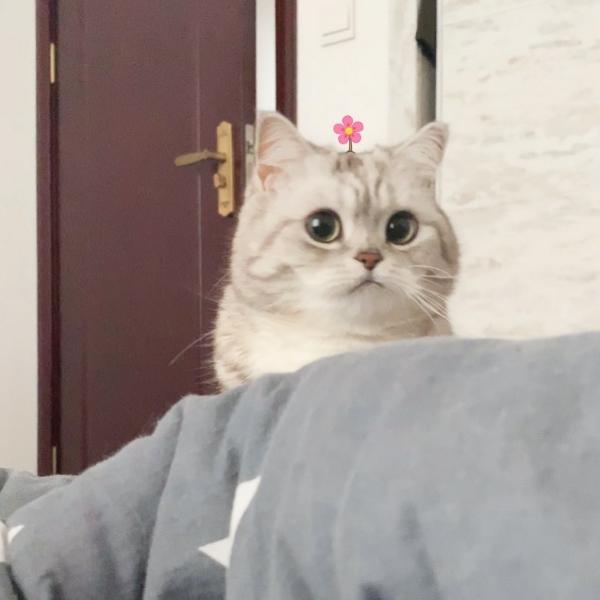 加菲猫o-o