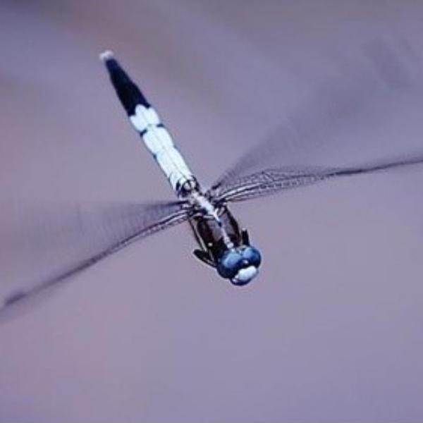 灰蜻蜓JSK