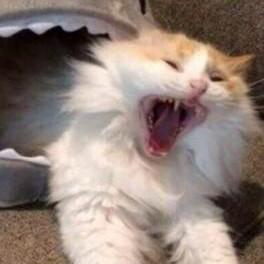被鳄鱼咬的猫558