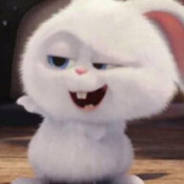 兔兔毛茸茸呦