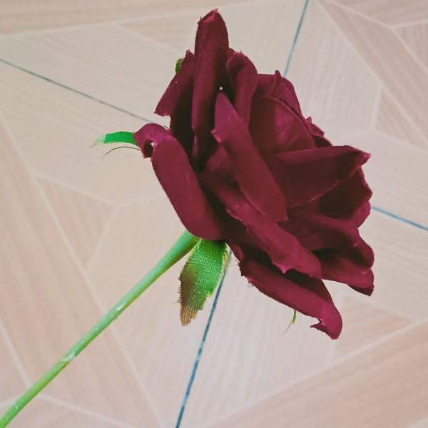 带刺玫瑰HD
