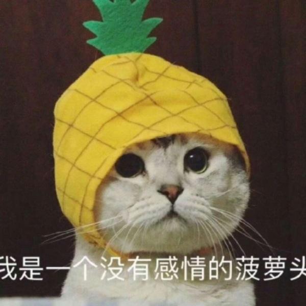 是一只没有感情的菠萝头