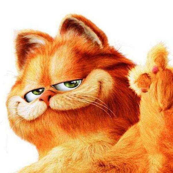 天上的加菲猫
