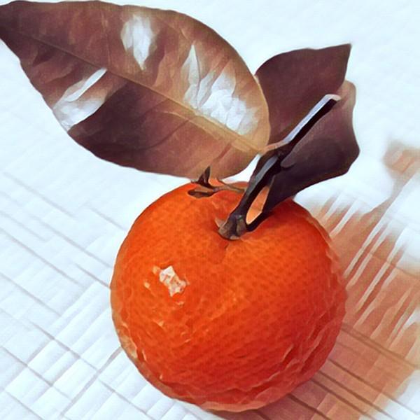 彩绘的蜜橘
