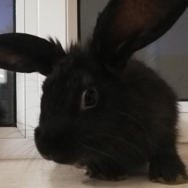 严于律己de娇小兔