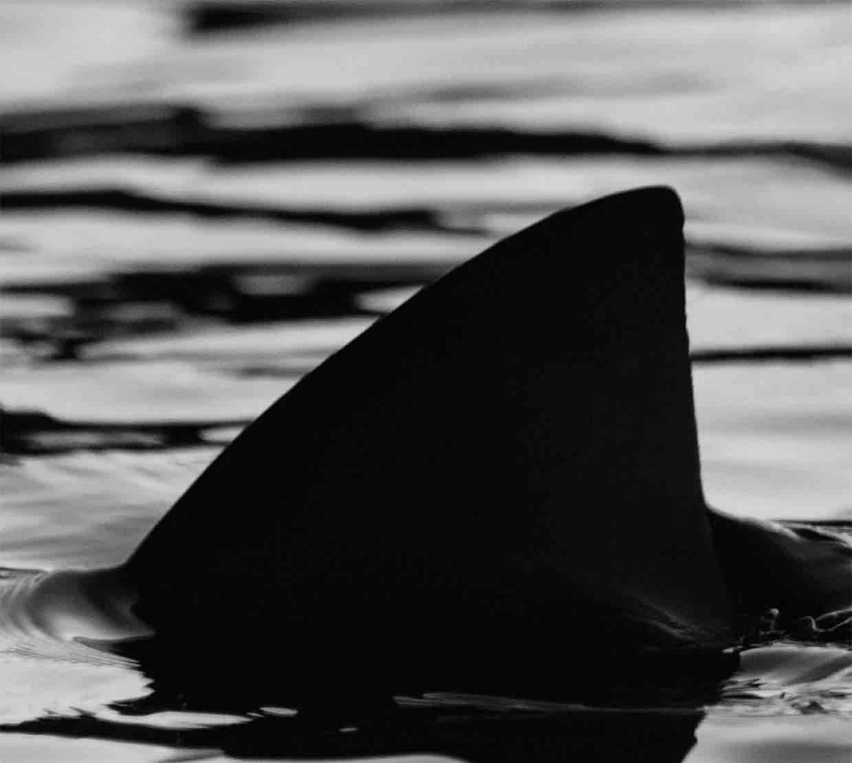 SharkPoker