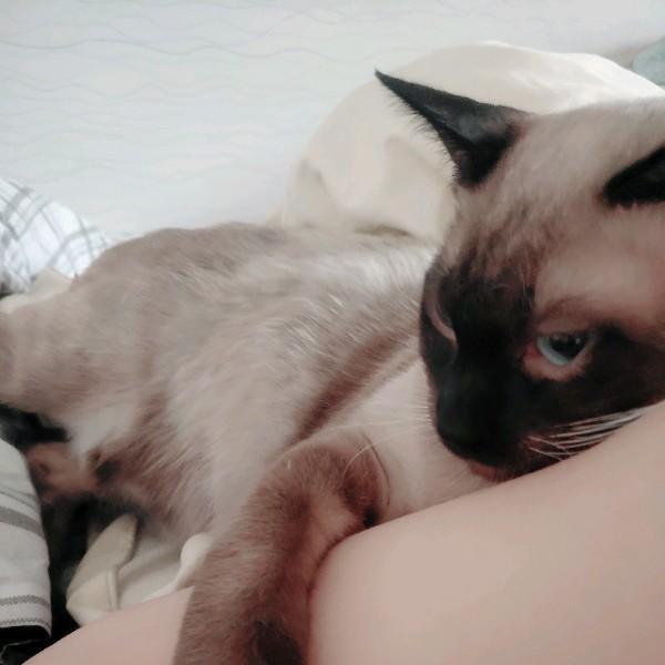 魔方是只猫