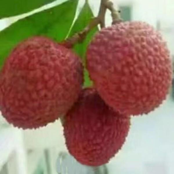 荔枝甜如蜜