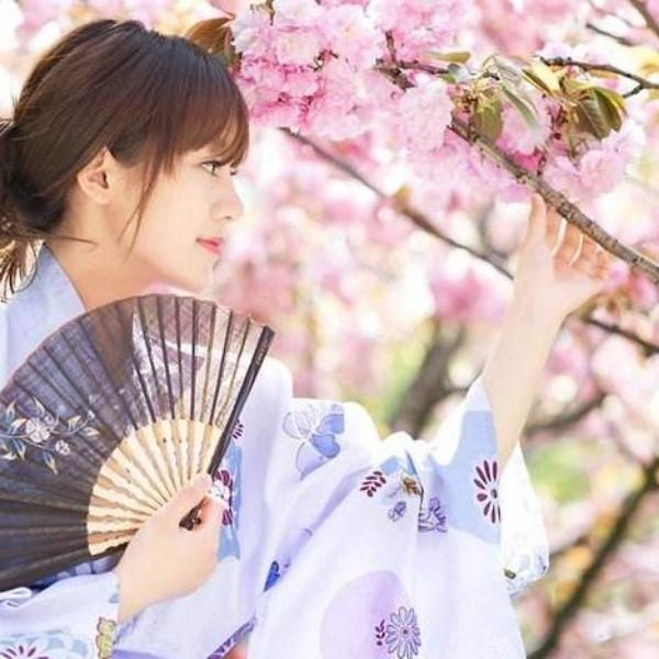 樱花舞夕阳