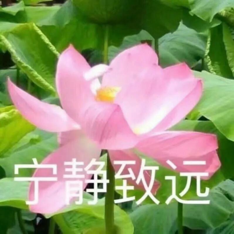 幸福人生_1947632
