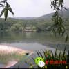 紫霞湖的鱼